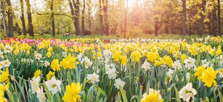 I1432_News_Spring_clean_your_finances_Header